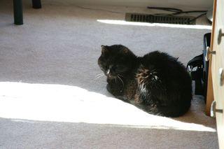 Selene in a sun spot in stasias room