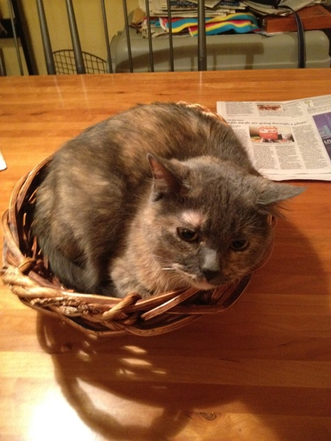 Hestia in a basket